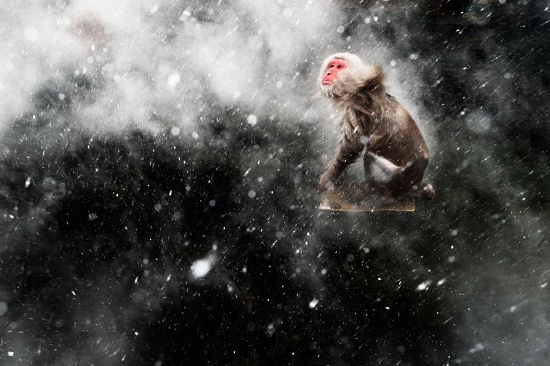 Jasper Doest (Holandia) - Snow moment